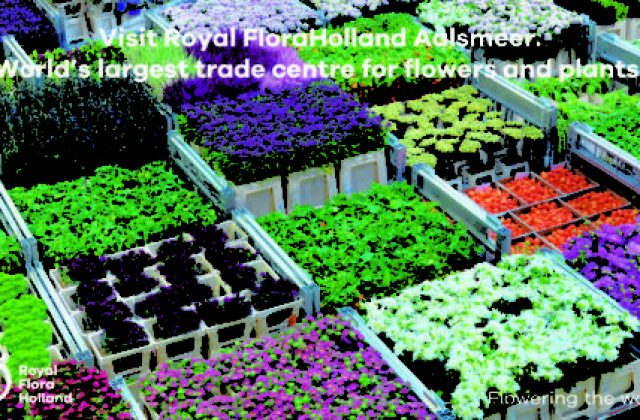 royal_flora_holland